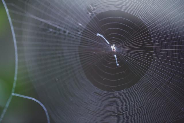 Webの語源である蜘蛛の巣