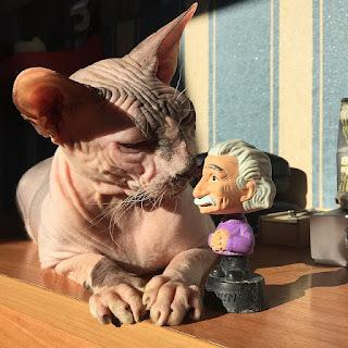 Cuidado de un gato esfinge bebe