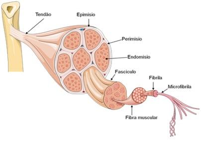 Orgaos do sistema respiratorio yahoo dating 8