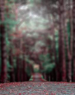 Blur Background HD Free Stock Image