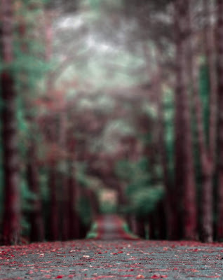 Road With White Fog Blur Background Free Stock Photo