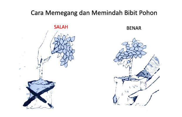 cara menanam pohon yang baik dan benar