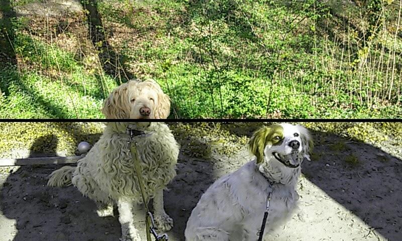 Welche Farben Können Hunde Sehen