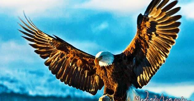 Mengenal Gambar Burung Garuda Sebagai Garuda Pancasila Mediavoria