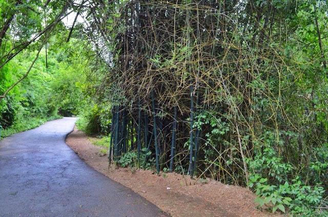 ทางเดินเข้าน้ำตกจากที่จอดรถ มีระยะทางประมาน 800 เมตร ในช่วงต้นทางเป็นถนนลาดยาง สองข้างทางร่มรื่นด้วยต้นไม้