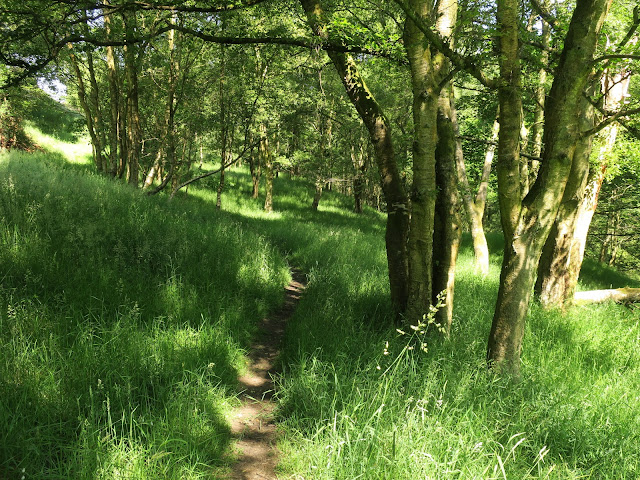 Path through woods in Luddenden Valley. June 25th 2020