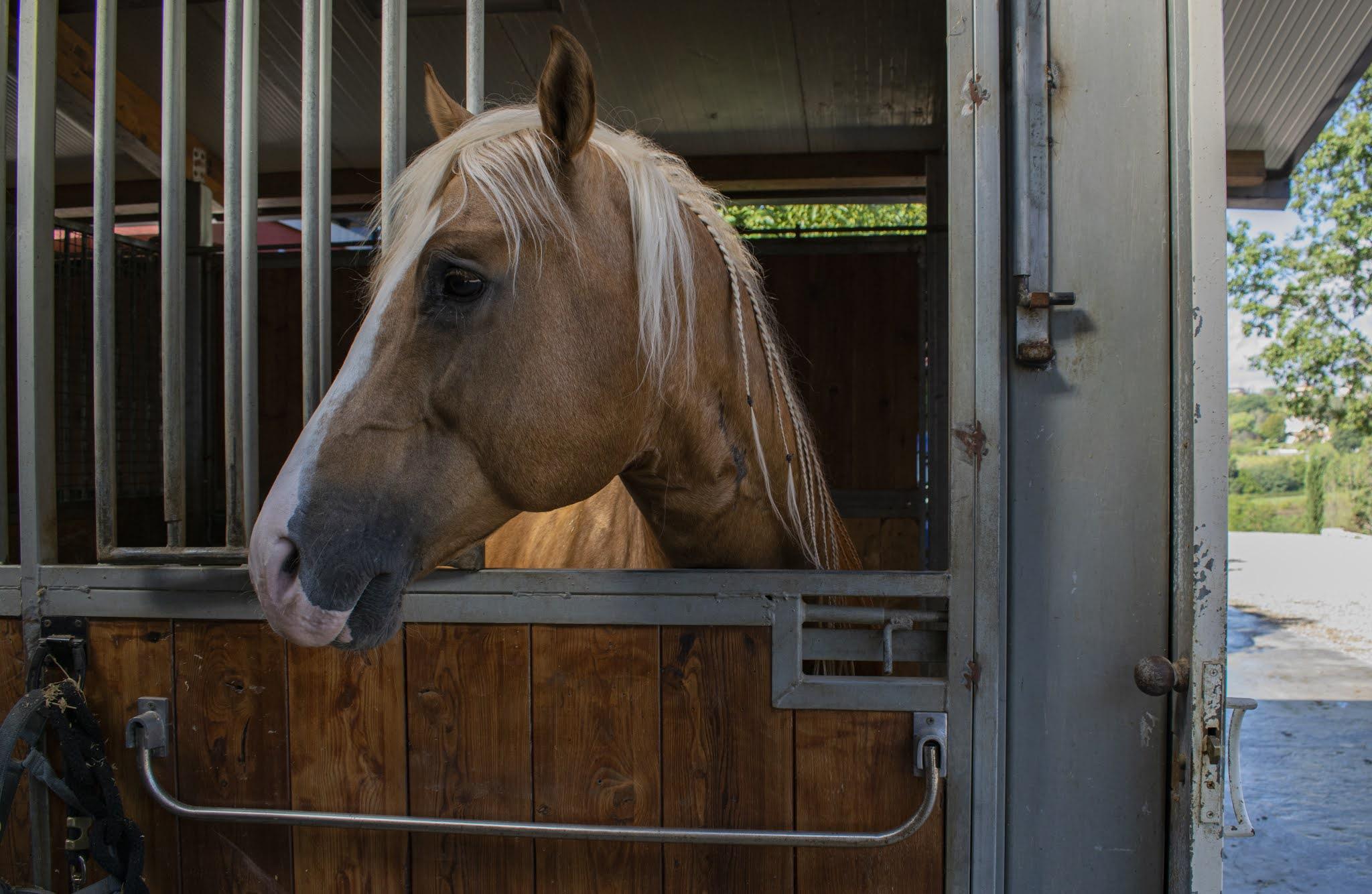 lbs quarter horses