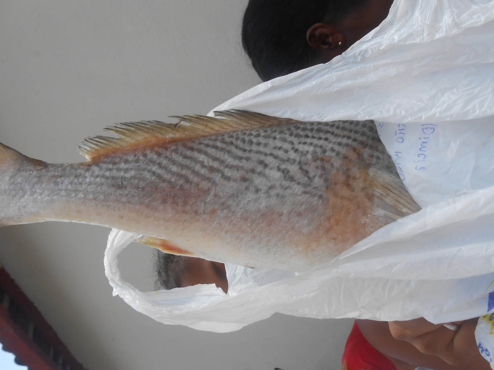 Resultado de imagem para peixes semana santa jitauna