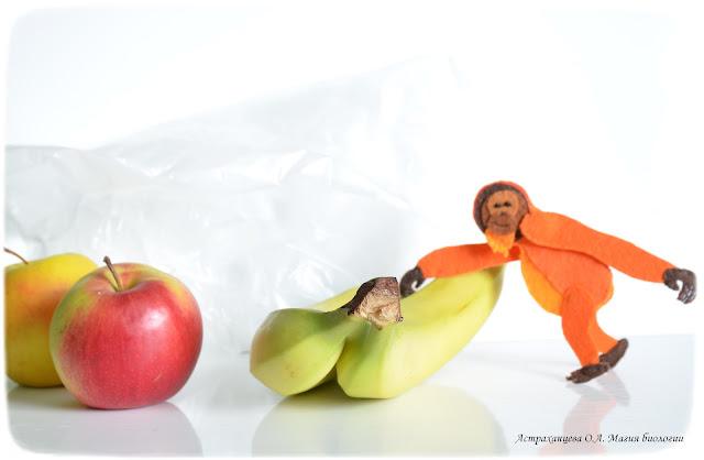 palchikovyj-teatr-igrushki-iz-fetra-orangutan-frukty