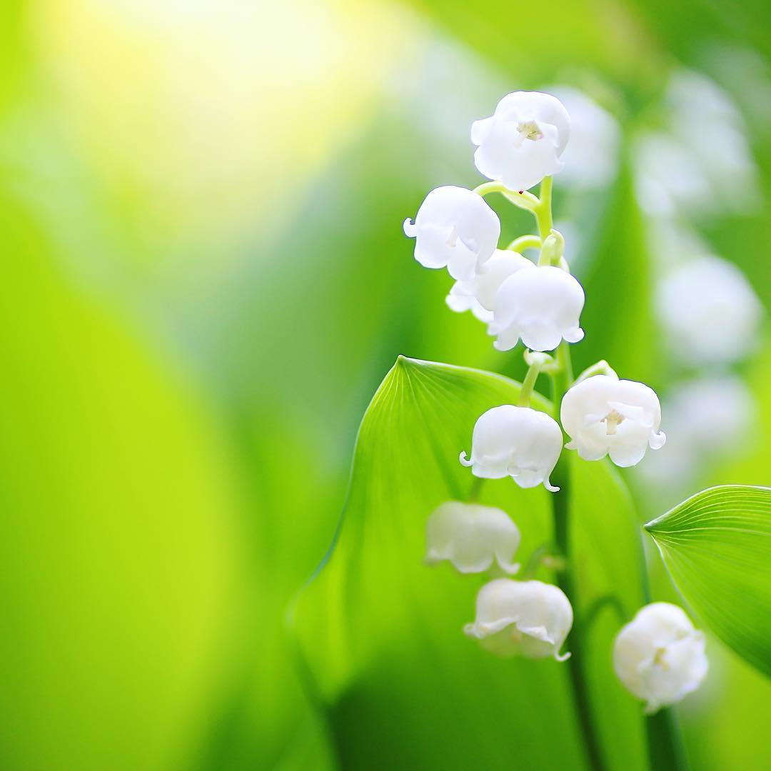 مجموعة رائعة من الزهور ( المجموعة الثانية 35 صورة )