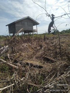 Kasus Perambahan Hutan Negara di Pasaman Barat Gakum KLHK Pusat dan Polda Sumbar Diminta Berkerjasama