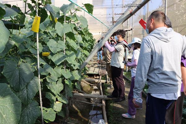 生物製劑導入農藥減量 花胡瓜病蟲害田間觀摩