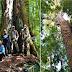 Vídeo: conheça a maior árvore da Amazônia que sobreviveu ás queimadas