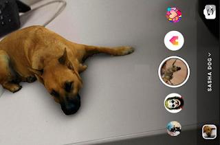 Sasha dog instagram filter || Cara mendapatkan Filter anjing di Instagram