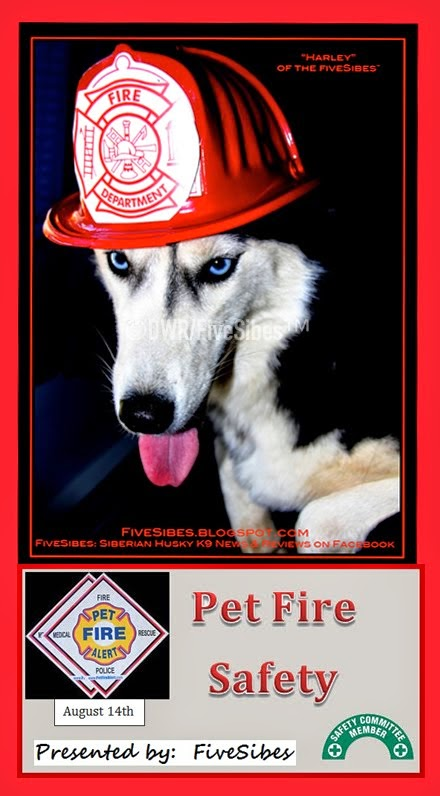 Safety Info Week: Pet Fire Safety