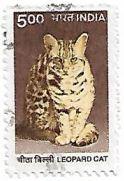 Selo Gato-leopardo