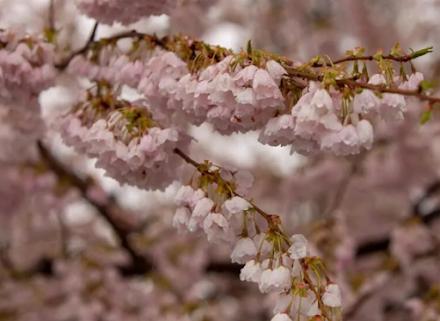 Η άνοιξη αγνοείται στις Ηνωμένες Πολιτείες : Χιονοπτώσεις ακόμη και στην Βοστώνη
