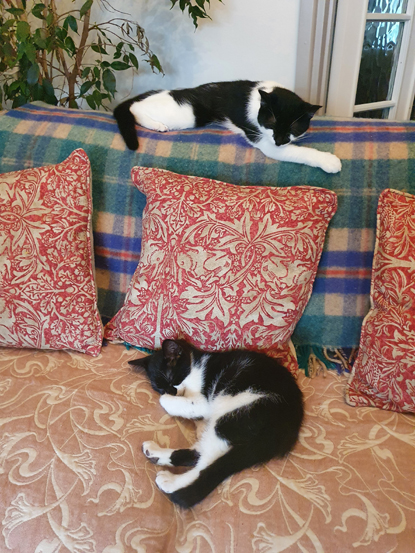 two black-and-white cats asleep on sofa