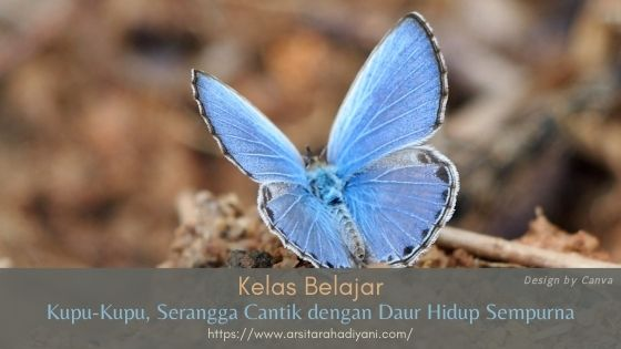 Kupu-Kupu, Serangga Cantik dengan Daur Hidup Sempurna