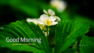 Beautiful flower images with good morning text