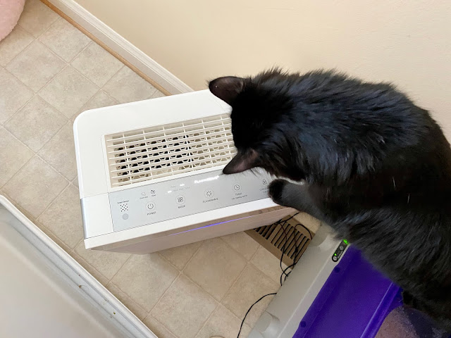 My cat climbing on the air purifier