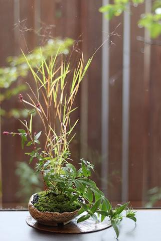 山野草盆栽教室作品例 ヒメアブラススキ ノコンギク ササリンドウ