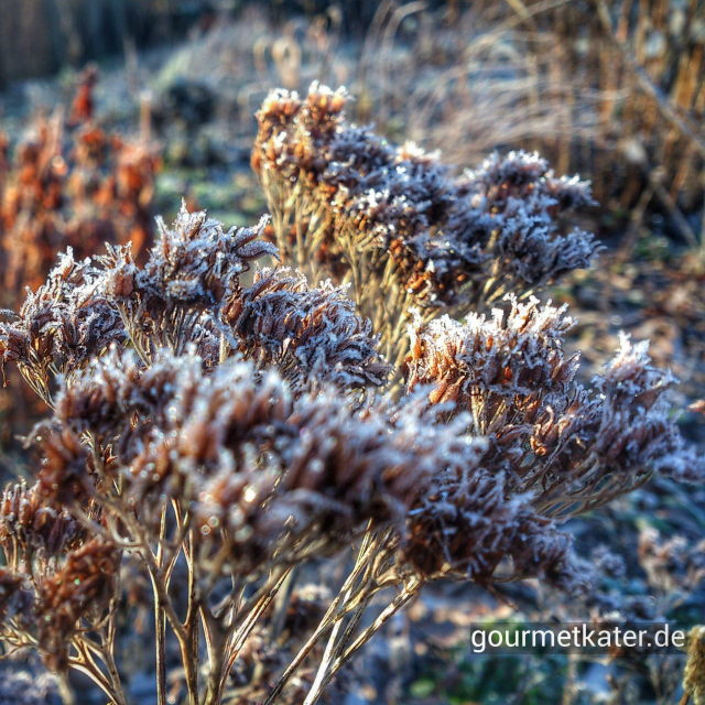 Frost auf Blume