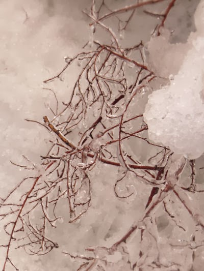 ice on shrub