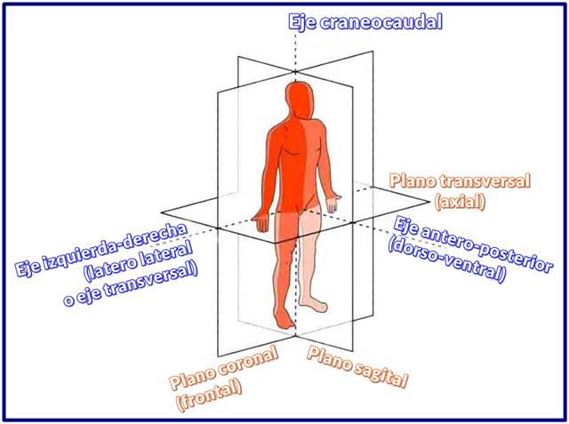 Planos anatómicos con sus ejes corporales humanos