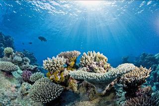 Coral reef 18