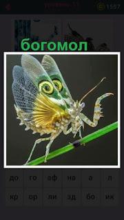 655 слов по травинке передвигается богомол с цветными крыльями 11 уровень