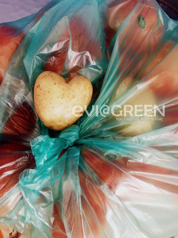 Βρήκε πατάτα σε σχήμα καρδιάς στο χωράφι του στην Εύβοια