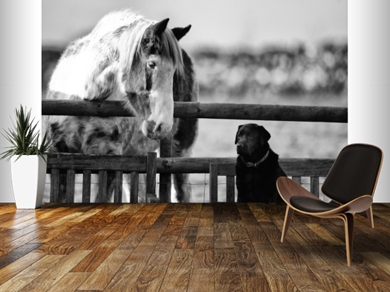 häst tapet hund fototapet svartvit tjejrum tjejtapet ungdomstapet flickrum