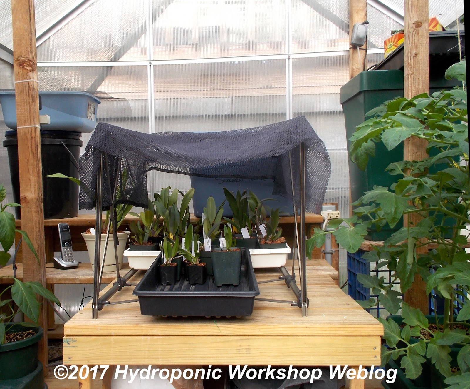 Hydroponic Workshop Journal May 27 2017 Shade For The Orchids