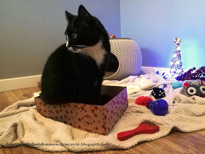 kot w pudelku, kot woli kartonowe pudełko, szczotka dla kota, zabawki