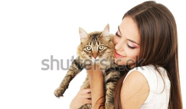 Biaya Steril Kucing dan Waktu Pengebirian yang Tepat