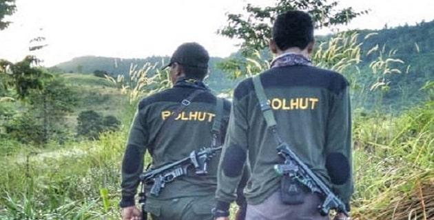 Gaji Polisi Hutan (Polhut)