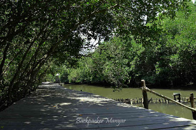 Menelusuri Hutan Mangrove Taman Hutan Raya Ngurah Rai Bali - Backpacker Manyar