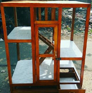 kandang untuk iguana