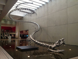 Reconstrucción esqueleto Titanoboa cerrejonensis