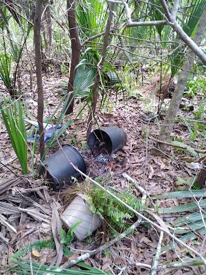 nursery pots in the bushes