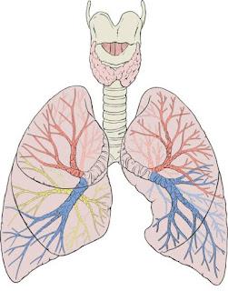 COPD A Cronic Disease,, लक्षण, बचाव,उपचार