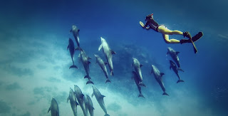 Marsa Alam Snorkeling Excursions