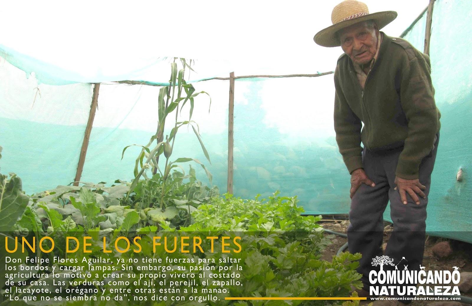 Reportaje chiguata donde los fuertes se quedan para for Viveros en lampa