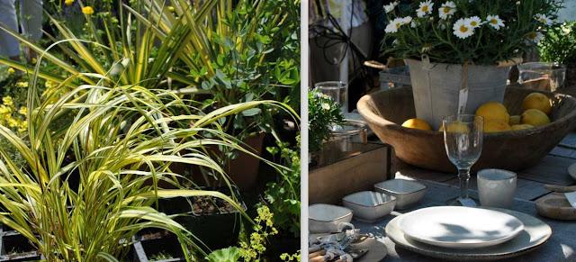 Pflanzenkombinationen und ländliche Tischdeko