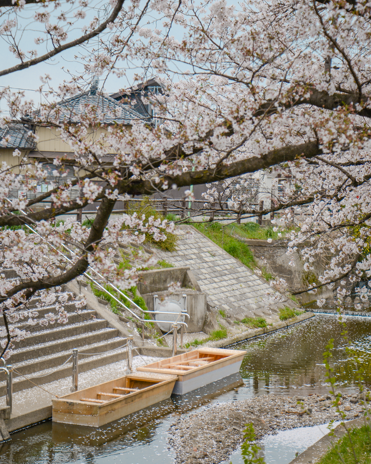 Best viewing spots for cherry blossom, Kawagoe Tokyo, Tokyo's Not So Secret Cherry Blossoms Spots That You Might Not Know Of - Style and Travel Blogger Van Le (FOREVERVANNY.com)