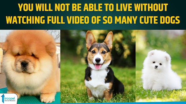 You will not be able to live without watching full video of so many cute dogs
