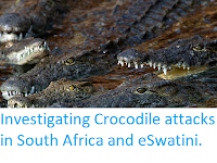 https://sciencythoughts.blogspot.com/2019/10/investigating-crocodile-attacks-in.html