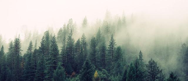 Bosques humedos y reino vegetal