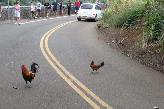 Binatang melintas di tengah jalan